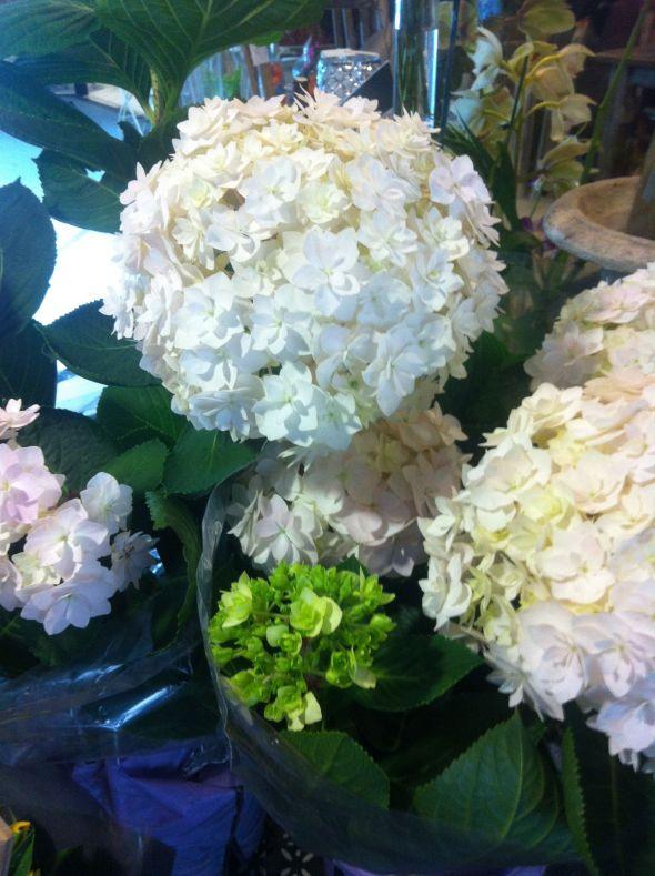 florist lane cove